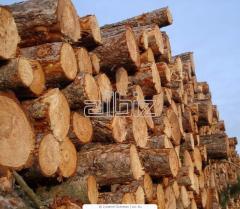 Лес-кругляк на экспорт