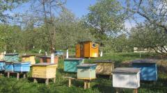 Пчелопакеты карпатской породы доставка по Украине