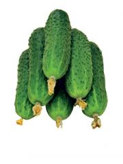 Cucumber long / / in a film and imp.