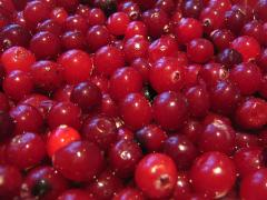 Cranberry fresh (wholesale and retail)