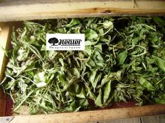 Вахта трехлистная, трава,100 г
