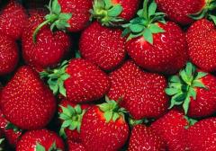 Fresh strawberry, seedling