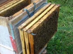 Продам  семьи пчёл