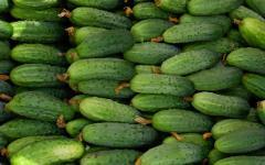 Cucumber Zhytomyr