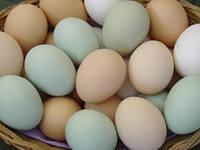 Продам домашнее куриное яйцо 0990284360