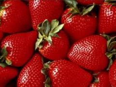 Fresh strawberry, berries fresh, seedling