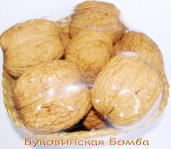 High-quality saplings of a walnut Grade Bukovinsky