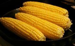 Кукуруза Пятихатский (ФАО270), 4,0 т