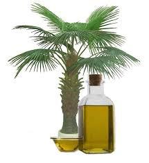 Palm oil RBD