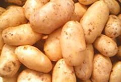 Картофель Карлена