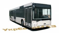 Bus maz-203069 and maz-203068