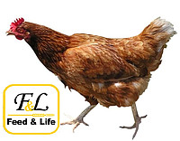 The personal computer 4-4 FOR LAYING HENS of BEST