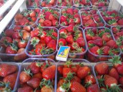 Strawberry from the producer