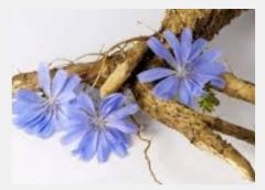 Chicory dried in Ukraine, Slavuta,
