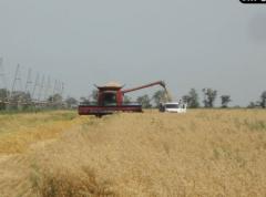 Hybrid seeds high-yielding wheat, barley, soy,