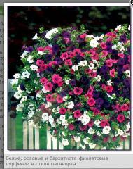Саженцы балконных вьющихся цветов: ампельной