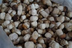 Cepes the frozen, Extra, wholesale, quality,