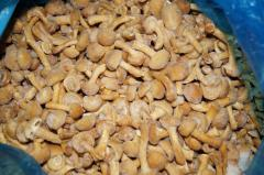 Mushrooms Honey agarics the frozen China, sale