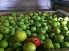 Продам яблоки 2 сорта