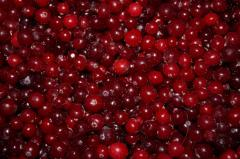 The cranberry frozen by wholesale documents,
