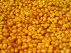 The sea-buckthorn frozen by wholesale quality,