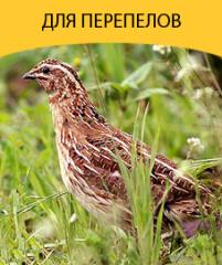 Compound feed for quails, komb_korm for perepel_v
