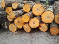 Round timber, alder, poplar