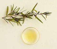 Essential oil of tea tree, packing of 5 kg