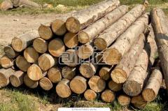 Forest products in Ukraine