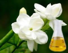 Essential oil of jasmine