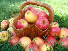 Apples ripe, tasty, different grades from the