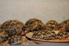 Черепахи сухопутные.