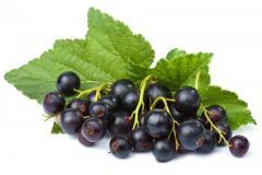 Blackcurrant oil