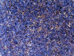 Лепестки василька синего,волошки