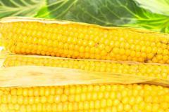 Кукуруза фуражная. 500 кг. Хорошее качество.