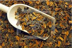 Buckthorn olkhovidny bark Frangulae alni, cortex