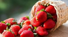 Sale of seedling of strawberry of different grades