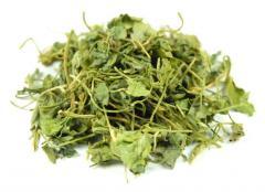 Trigonella leaves (fenugrek, Shambala)