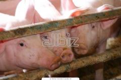 Белково- витаминные добавки для животноводства