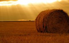 Hay wholesale Ukraine