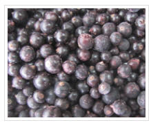 Blackcurrant of fast freezing