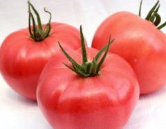 Розовый томат, розовые помидоры