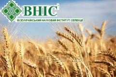 Зерновые колосовые культуры