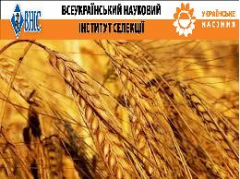Семена озимих зерновых