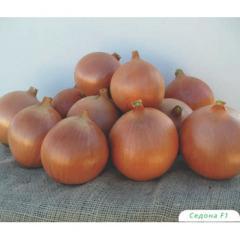 F1 Sedona onions