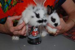 Кролики карликовые и декоративные - источник...