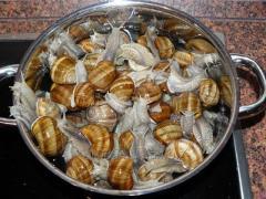 Grape snails fresh