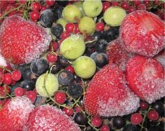 The fruit frozen from the producer. Export is