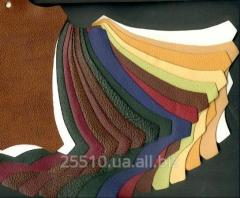 Genuine leather for tailoring of footwear
