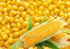 الذرة